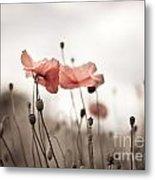 Poppy Flowers 03 Metal Print