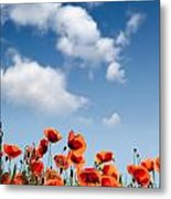 Poppy Flowers 04 Metal Print