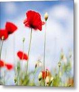 Poppy Flowers 06 Metal Print