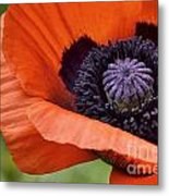 Poppy For Peace Metal Print
