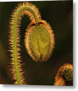 Poppy Light Metal Print