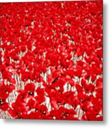Poppy Meadow ... Metal Print