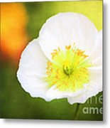 Poppy Of Peace Metal Print