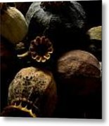 Poppy Pods Metal Print