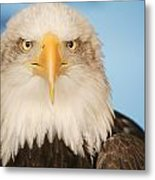 Portrait Of A Bald Eagle Metal Print