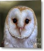 Portrait Of A Barn Owl Metal Print