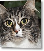 Portrait Of A Cat With Two Toned Eyes Metal Print