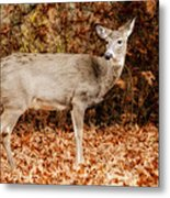 Portrait Of A Deer Metal Print by Kathy Jennings