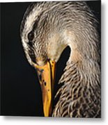 Portrait Of A Duck Poster Metal Print
