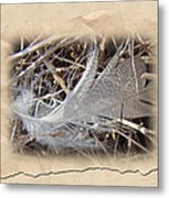 Portrait Of A Feather Metal Print