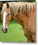 Portrait Of A Horse Metal Print