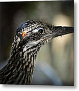 Portrait Of A Roadrunner  Metal Print