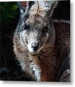 Portrait Of A Wallaby Metal Print