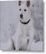 Portrait Of A Young Dog Metal Print