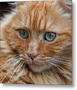 Portrait Of An Orange Kitty Metal Print