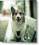 Portrait Of Dog Metal Print