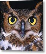 Portrait Of Great Horned Owl Metal Print