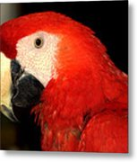 Portrait Of Macaw Metal Print