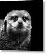 Portrait Of Meerkat Metal Print
