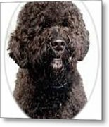 Portugese Water Dog 305 Metal Print