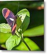 Postman Butterfly Metal Print