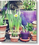 Pot Plants Metal Print by Lespetitsriens
