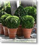 Potted Topiary Garden Metal Print