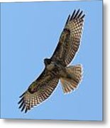 Powerful Freedom Metal Print