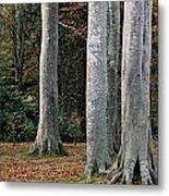 Powerscourt Woods,co Metal Print
