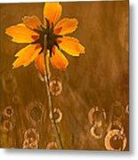 Prairie Coreopsis And Dewdrops Metal Print