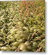 Prairie Crop With Weeds Metal Print