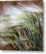 Prairie Grass, Badlands National Park Metal Print