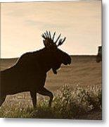 Prairie Moose Metal Print