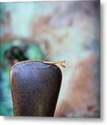 Praying For Water 1 Metal Print