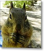 Praying Nuts Metal Print by DJ Laughlin