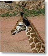 Precious Baby Giraffe Metal Print by Donna Parlow