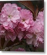 Precious Cherry Blossom Metal Print