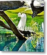 Preening Watercolor Metal Print