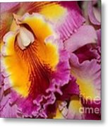 Pretty And Colorful Orchids Metal Print