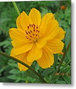 Pretty And Lovely In Yellow Metal Print