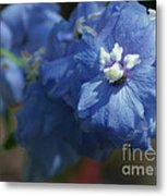 Pretty Blue Delphinia Metal Print