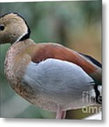 Pretty Duck  Metal Print