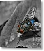 Pretty Fly For A Fly Guy Metal Print
