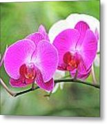 Pretty Orchids All In A Row Metal Print