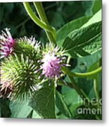 Pretty Prickles Metal Print