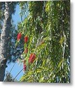 Pretty Red Furry Flowers Metal Print
