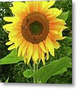 Pretty Sunflower  Metal Print