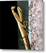 Preying Mantis Metal Print