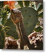 Prickly Lunch  Metal Print