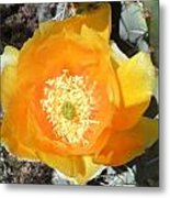 Prickly Pear Cactus Flower Metal Print